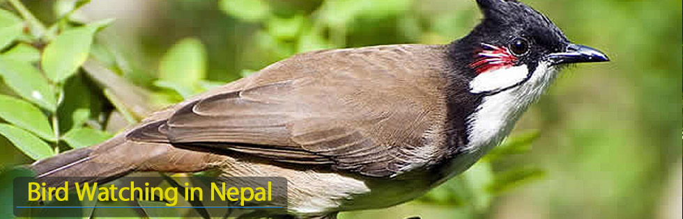 Nepal bird watching