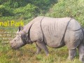 chitwan-national-park